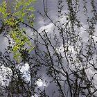 Branch by soffee12