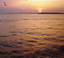 Soaring at Sunset in Destin, FL by Charldia