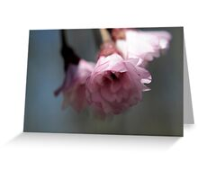 Let your heart not worry, for they have helped to cleanse the negativity Greeting Card