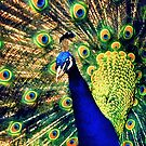 Feathered Finery by Nadya Johnson