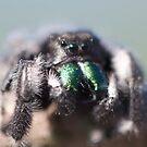 spider  by katpartridge