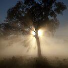 Misty Tree by John Vandeven