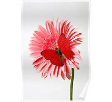 Red Butterfly On Pink Mum Poster
