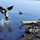 Duck Fighting by VikasGupta