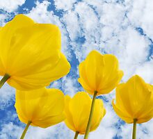 Highlights of Spring by Corinne Noon