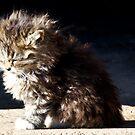 Basking Fur ball by martinilogic