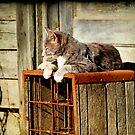 Basking Momma Cat by martinilogic