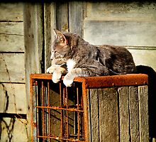 Basking Momma Cat by martinilogic