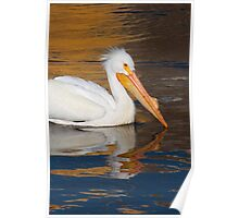 Pelican Reflection Poster
