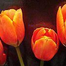 Orange Tangerine by PatChristensen