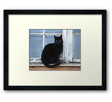 Black farm cat Framed Print