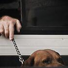 the dog by Alex Ruzaykin