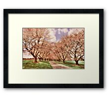 Down The Cherry Lined Lane Framed Print