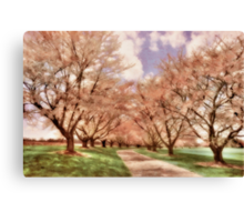 Down The Cherry Lined Lane Canvas Print