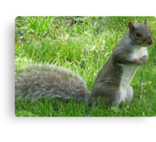 Standing Squirrel Canvas Print