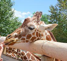 Friendly Giraffe at Cheyenne Mountain Zoo by Margot Ardourel