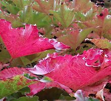 The beauty of the Virginia Creeper in Autumn by waxyfrog