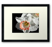 Pretty Daffodil ©  Framed Print