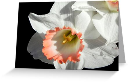 Pretty Daffodil ©  by Dawn M. Becker