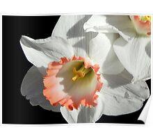 Pretty Daffodil ©  Poster