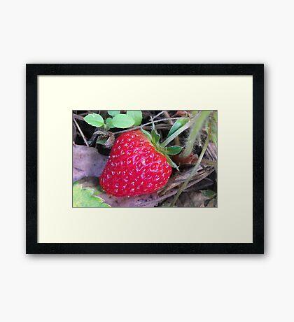 Giant Strawberry Framed Print
