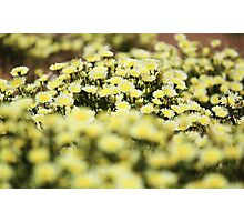 The Blooming Mojave Photographic Print