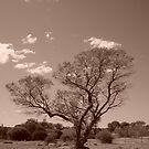 Lonely Tree by AgirlnamedfREd