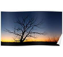 Tree Silhouette at Sunset, Edithburgh, South Australia Poster
