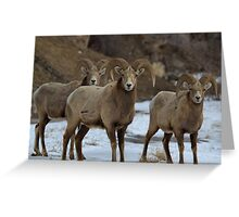 3 Rams Greeting Card