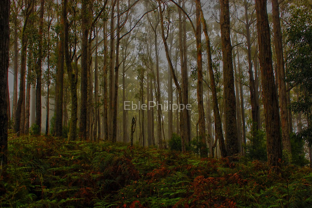 Foggy forest by EblePhilippe