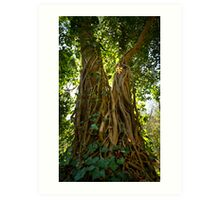 Vine on tree at Leg of Mutton Lake Art Print