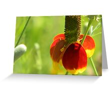 Mexican Hat with Florets Greeting Card