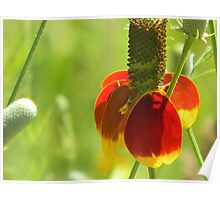 Mexican Hat with Florets Poster
