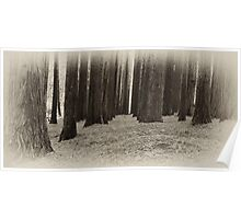 Red Woods - Otways Victoria Poster