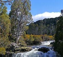 Waterfall, Enchanted Walk, Cradle Mountain N.P., Tasmania by Margaret  Hyde