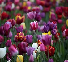 Colourful Tulips by Nugrahini Tj.
