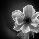 Anemone by peterrobinsonjr