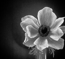 Anemone by peterrobinsonjr