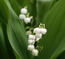 Lily of the Valley by Simon Elliott