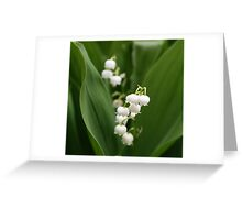 Lily of the Valley Greeting Card