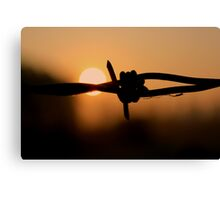Barbed wire - Sunrise Canvas Print