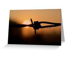 Barbed wire - Sunrise Greeting Card