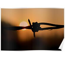 Barbed wire - Sunrise Poster