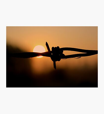 Barbed wire - Sunrise Photographic Print