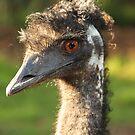 EMU by Judi Corrigan