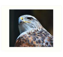 Hawk eye Art Print