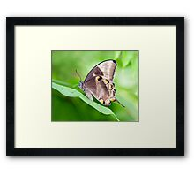 Wings - ulysses butterfly Framed Print