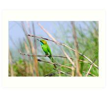 Green Bee Eater bird Art Print