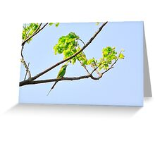 Green Bee Eater bird Greeting Card