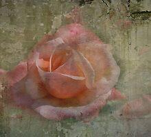 Faded Rose by Trevor Kersley